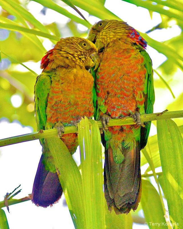 The Cute Couple