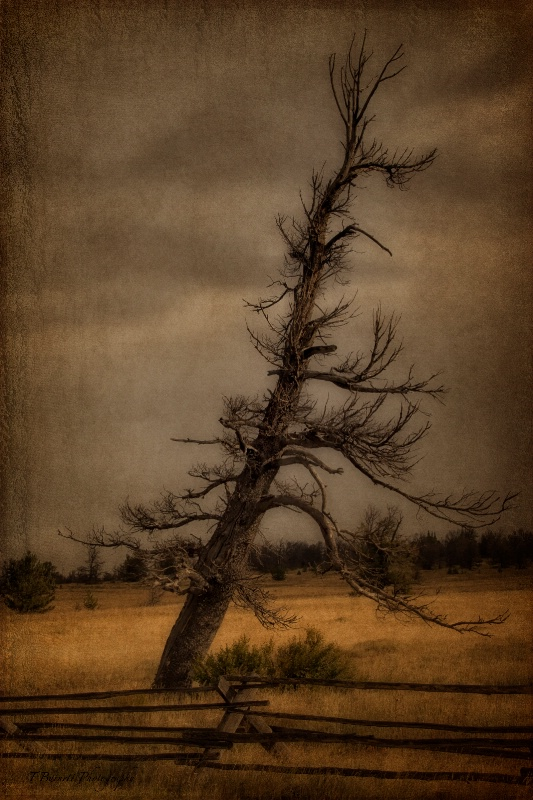The Death of a Tree