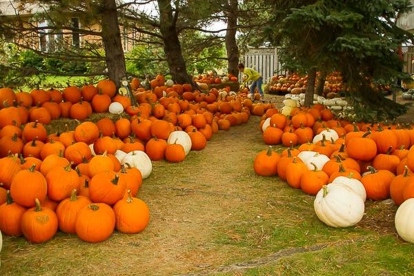 Niagara is the Pumpkin Patch