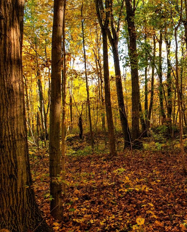 An Autumn Woods