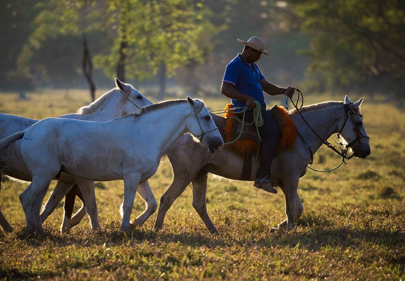 cowboy-on-the-way-home-keepers-day-3-ct1q006514082