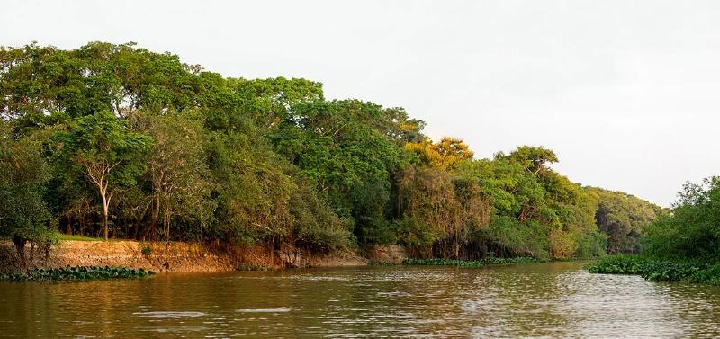 pantanal-river-panorama1-pantanal--aug-22-a