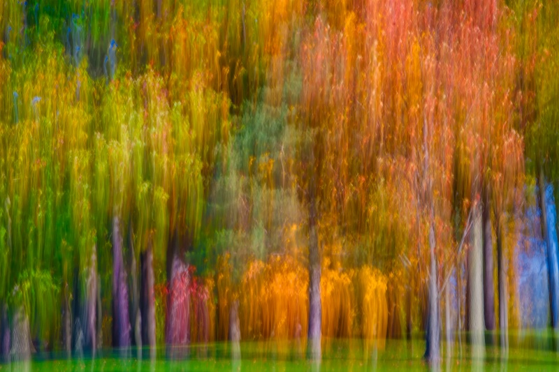 Autumn's Abstract Palette