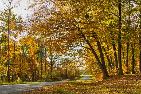 Arching Over Autumn