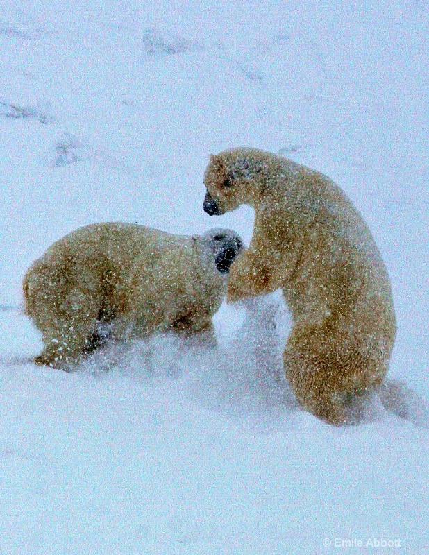 Polar Bear Dance #2