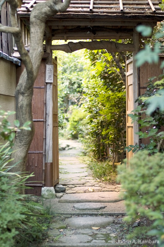 glimpse into a Japanese garden