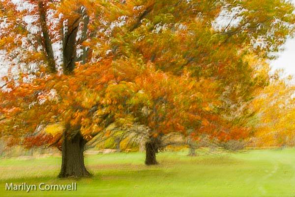 Swirling Autumn