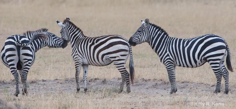 Zebras Nose to Nose to Hip
