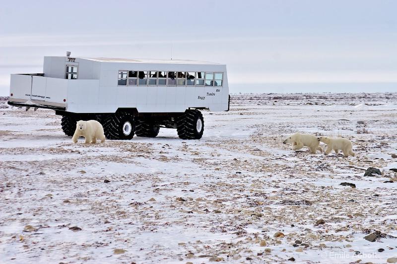 The Tundra Buggy