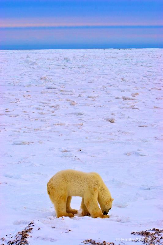 Vastness of the Tundra