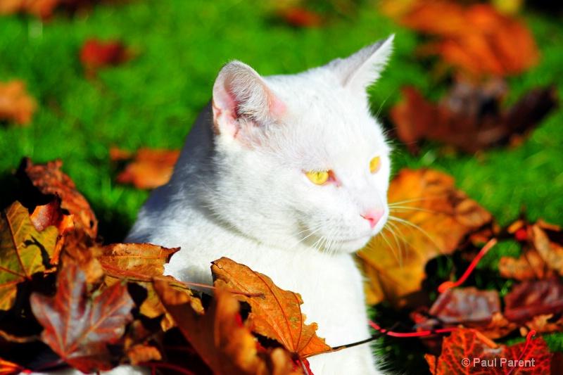 Yahoo the White Cat