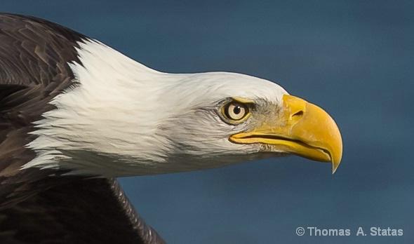 Eagle 4 U
