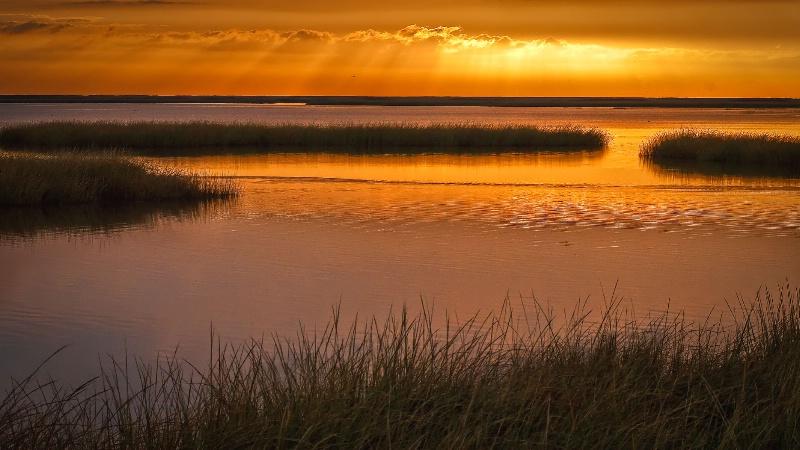 Golden Morning- Shearness