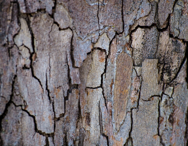 Cracked Bark