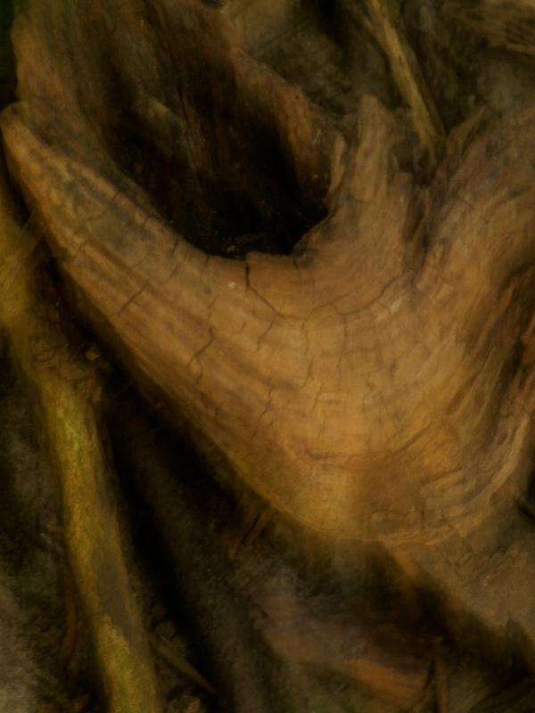 Phantom Wood