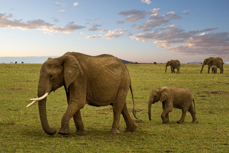 Elephant Walk- Kenya