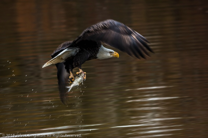 Eagle's Catch