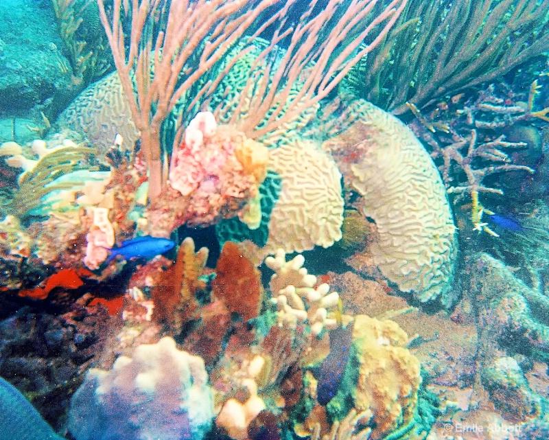 Coral Gardens BVI