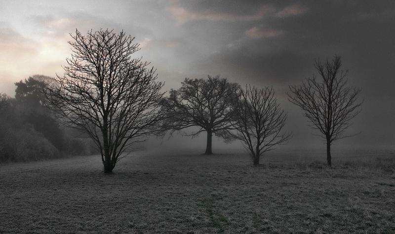 Quartet in the Fog