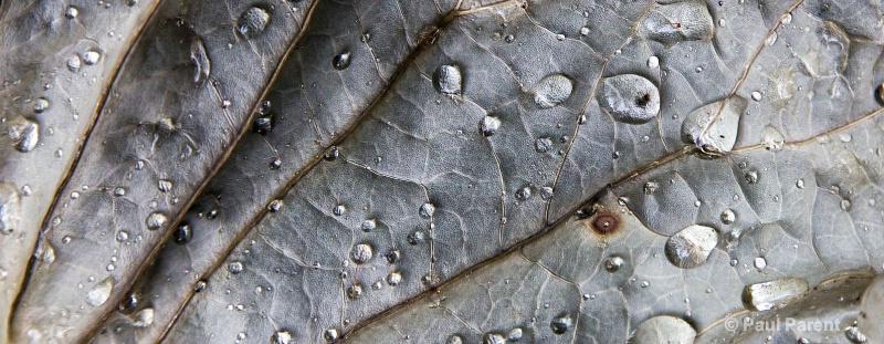 A Simple Leaf