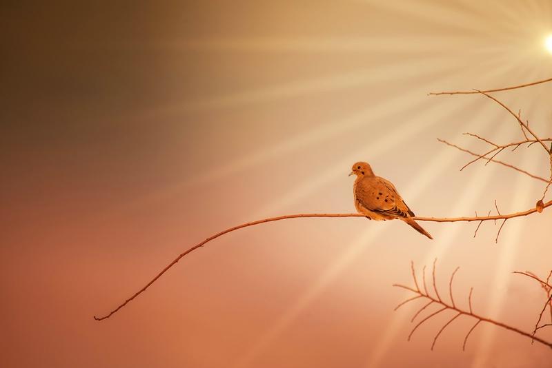 Sunshine..... On My Shoulder