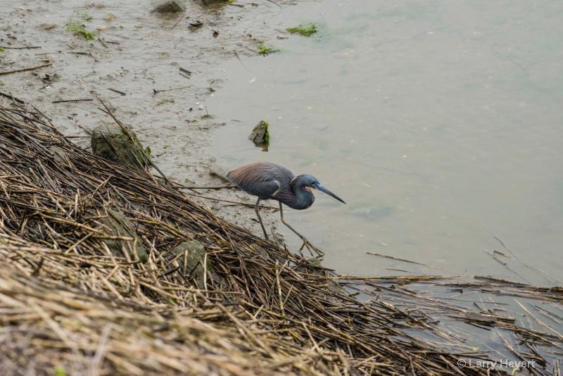 Bird at Huntington State Park, South Carolina