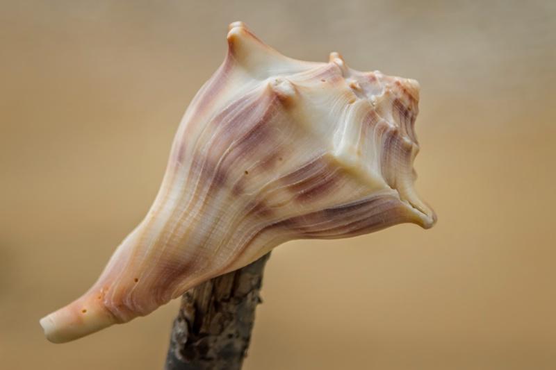 Shell 7339