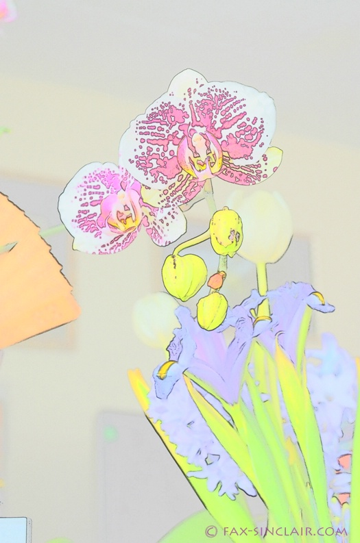 Orchids of Desk