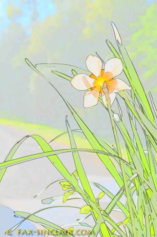 Daffyland