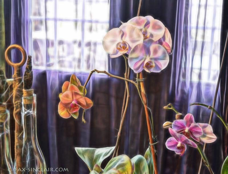 D'Elle's Orchids