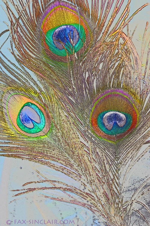 Fun with Feathers 4