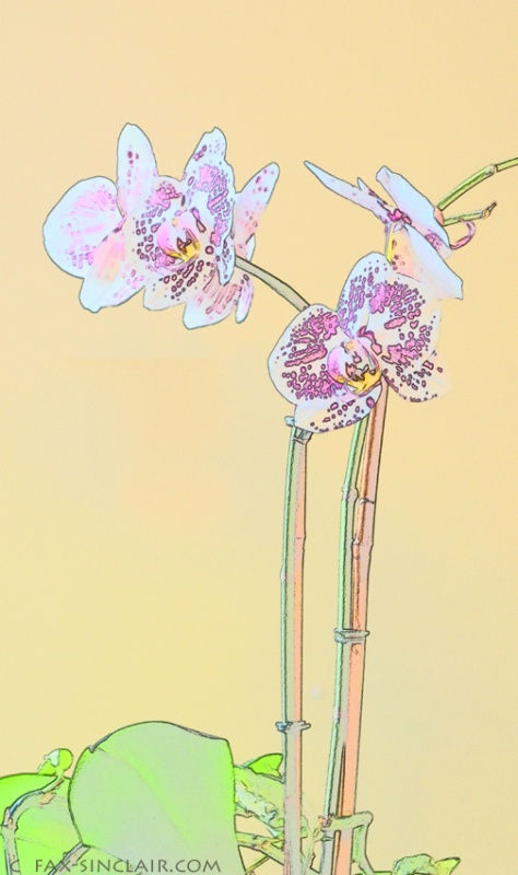 orchid effects fx sm