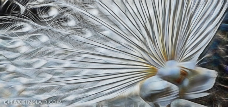 Fractalized Feathers 2