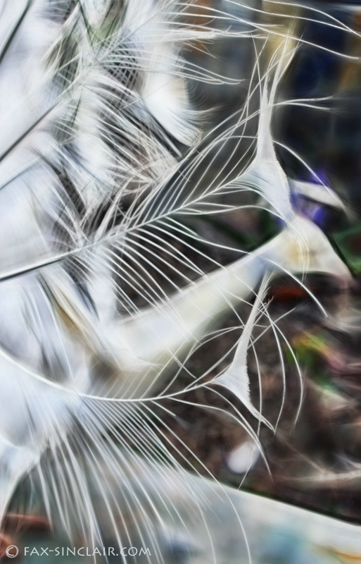 Fractalized Feathers