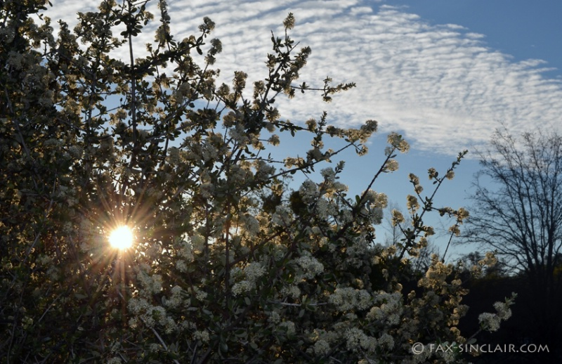 Chaparal Sunrise