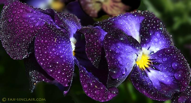 universe  flowers sm
