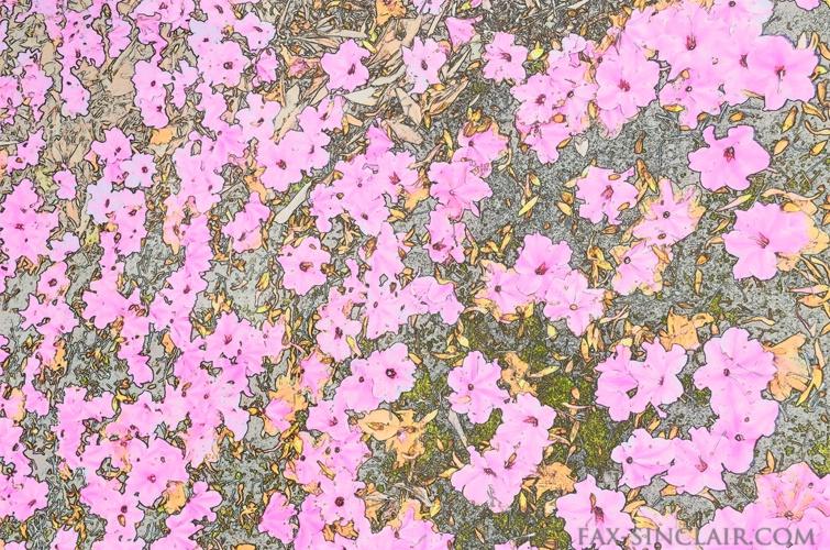 Fallen Blossoms 3