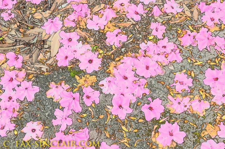 Fallen Blossoms 1
