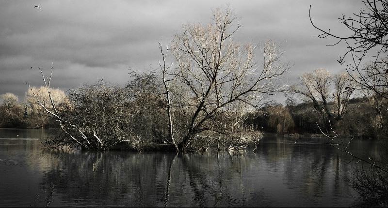 Bird Island in the Reservoir