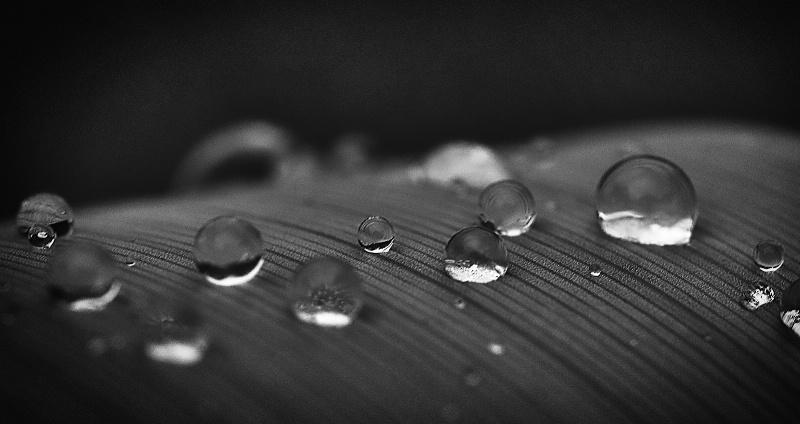 Drops Alignes