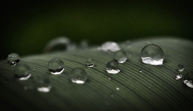 Dew Drops  perfectly placed