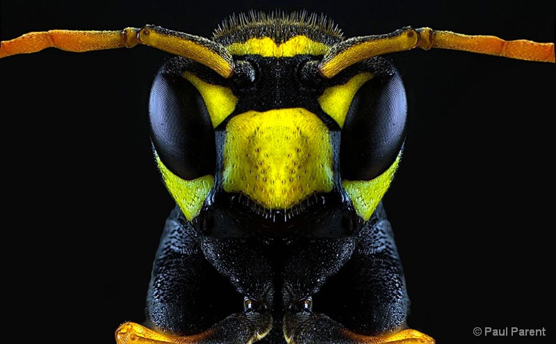 The Real Closeup Bee