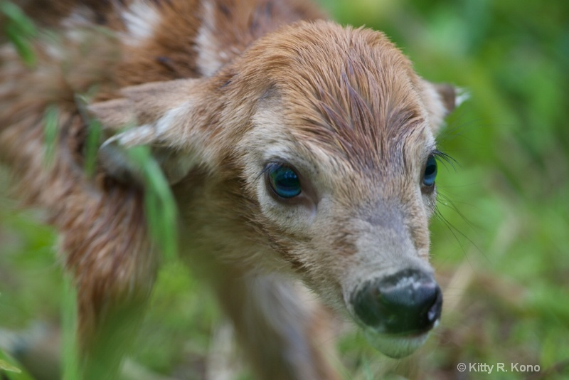 Brand Spanking New Baby Fawn