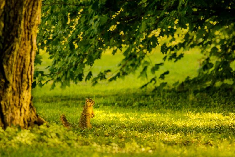 A Squirrel Surveys It's Surroundings