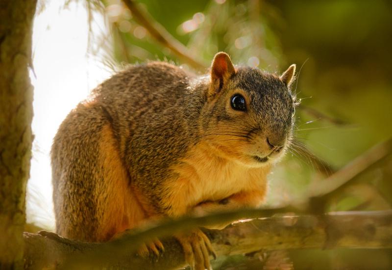 Lounging Squirrel 2