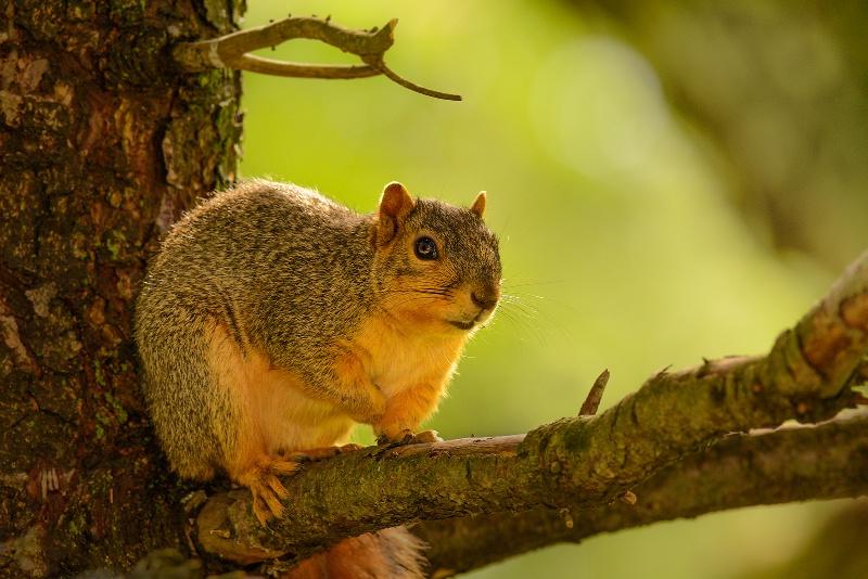 Lounging Squirrel 1
