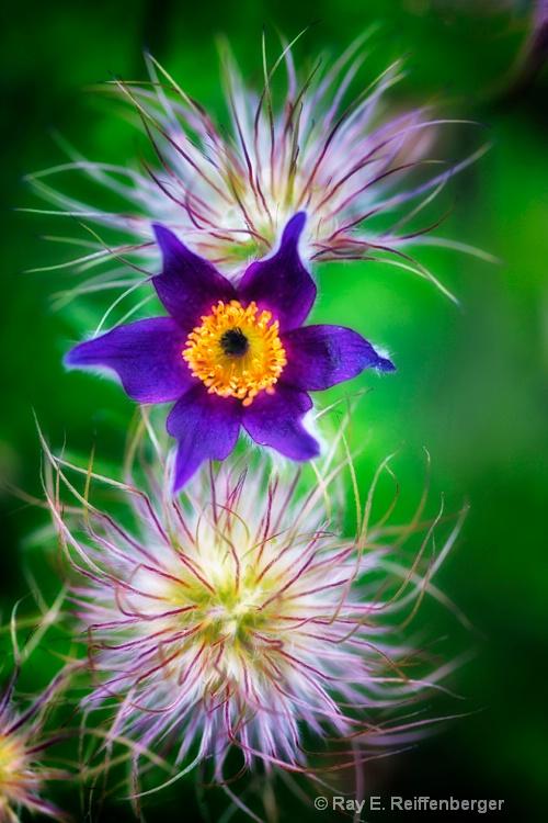 h0c7389 flower15