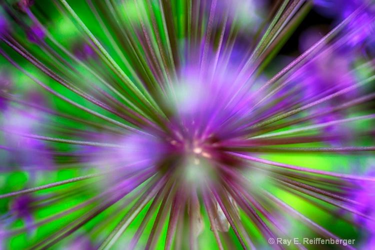 h0c7779 flower15