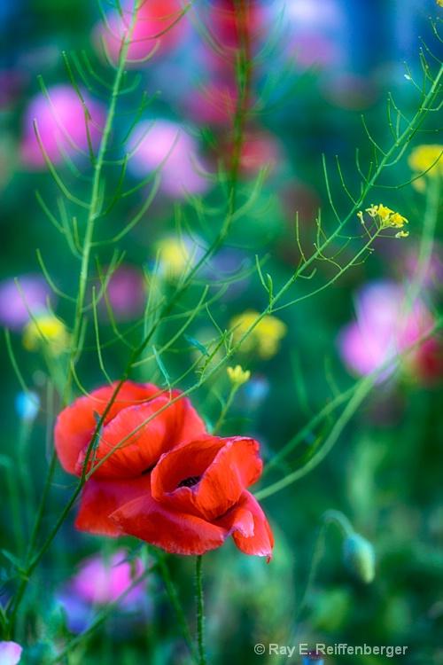 h0c9172 flower15