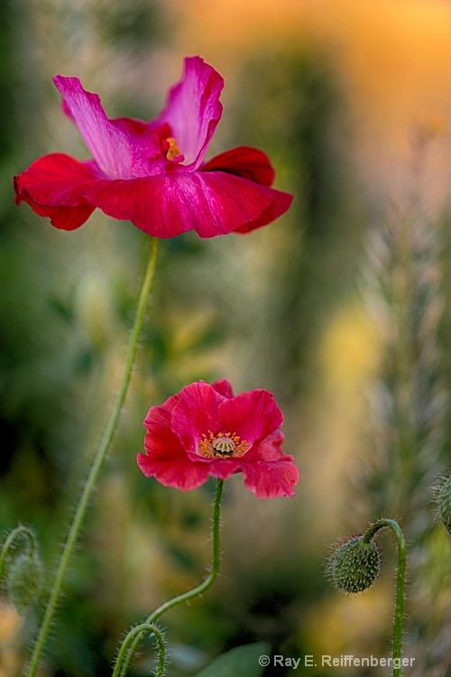 h0c9180 flower15